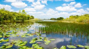 Florida Doing Good By Purchasing 20,000 Acres of Wetlands Protecting It From Oil Drilling