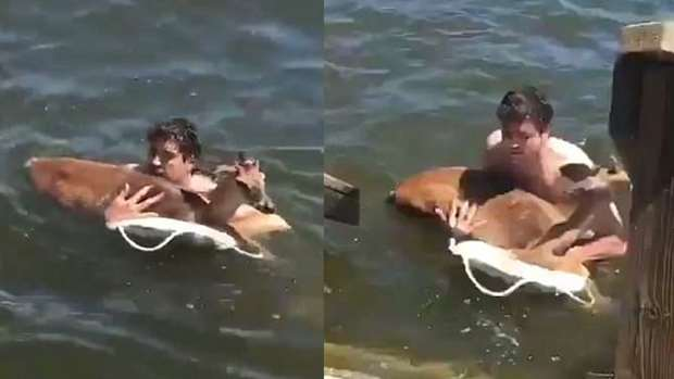 Read more about the article Good Samaritan Boat Riders Save The Life Of Baby Deer Using CPR