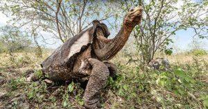 Good News: 15 Rare Tortoise Return Home After 55 Years