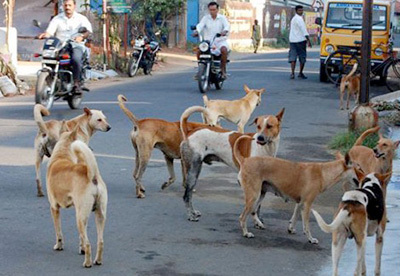 Good Samaritans Feed Helpless And Hungry Stray Dogs
