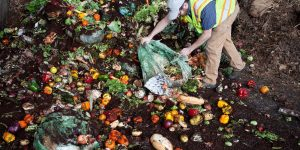 Read more about the article Vermont Doing Good Banning Food Waste In Favor of Composting