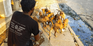 35-year-old Rescued Over 70,000 Animals And Brought Them Back To Life