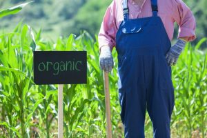 Spike in Organic Produce Sales Is Good News for Organic Farmers