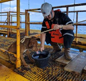 Doing Good: Dog Found Swimming 135 Miles Offshore Rescued By Oil Rig Workers In Gulf Of Thailand