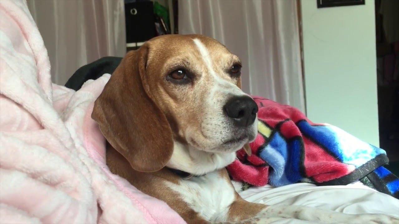 Good Samaritan Reunites Family with Their Missing Dog Jake